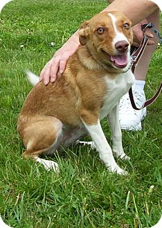 Terrier (Unknown Type, Medium) Mix Dog for adoption in Somerset, Pennsylvania - Jessica