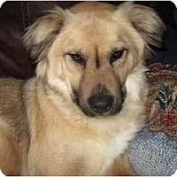 Adopt A Pet :: Delilah - kennebunkport, ME