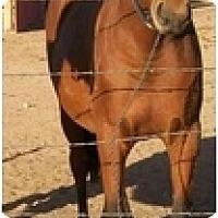 Adopt A Pet :: Gracie - Pueblo, CO