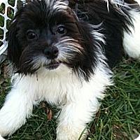 Adopt A Pet :: Gizmo - Hilliard, OH