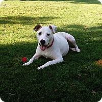 Adopt A Pet :: Angel Baby - Silsbee, TX