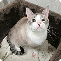Adopt A Pet :: T-Bone - Gilbert, AZ