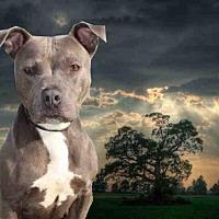 Adopt A Pet :: JESSICA RABBIT - Fairfield, CA