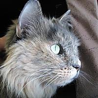 Adopt A Pet :: Laura - Prescott, AZ