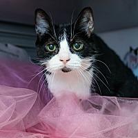 Adopt A Pet :: Ezri - Houston, TX