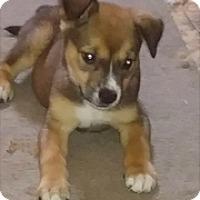 Adopt A Pet :: KC - Thousand Oaks, CA