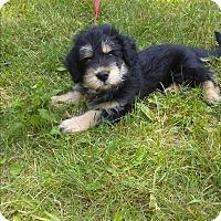 Adopt A Pet :: Wallie - Treton, ON
