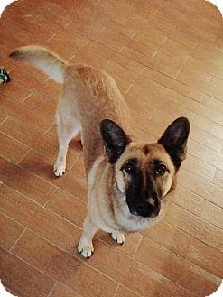 German Shepherd Dog Mix Dog for adoption in San Antonio, Texas - McKayla