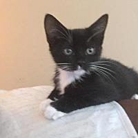 Adopt A Pet :: Dakoda - McKinney, TX