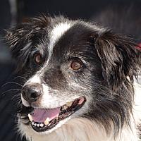 Adopt A Pet :: Kanga - Lafayette, IN