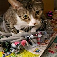 Adopt A Pet :: Tiny-Tina - Missouri City, TX