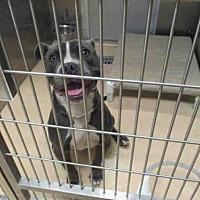 Adopt A Pet :: POPPY - Olivette, MO
