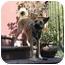 Photo 2 - Shepherd (Unknown Type) Mix Dog for adoption in Albuquerque, New Mexico - Zoey