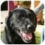 Photo 4 - Labrador Retriever Mix Dog for adoption in Berkeley, California - Arthur
