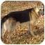 Photo 3 - German Shepherd Dog Dog for adoption in Pike Road, Alabama - Fletcher