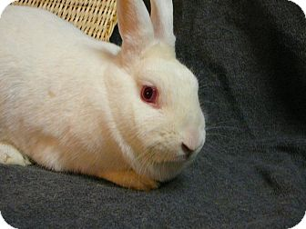 Other/Unknown Mix for adoption in Newport, Delaware - Ginny