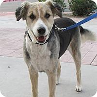 Adopt A Pet :: Betsy - Gilbert, AZ