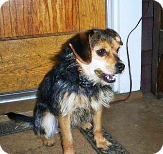Border Terrier Mix Dog for adoption in Radford, Virginia - Tillie