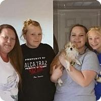 Adopt A Pet :: Momma Fox - Sacramento, CA