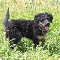 Adopt A Pet :: *Riley - PENDING - Westport, CT