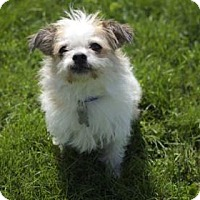 Adopt A Pet :: Rowdy - West Allis, WI