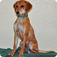 Adopt A Pet :: Hobie - Port Washington, NY