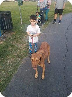 Shepherd (Unknown Type)/Hound (Unknown Type) Mix Dog for adoption in Appleton, Wisconsin - Mario