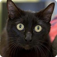 Adopt A Pet :: Stormy - Atascadero, CA