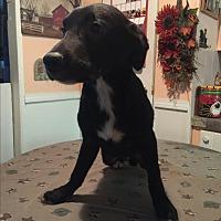 Adopt A Pet :: Jessie - Kittery, ME