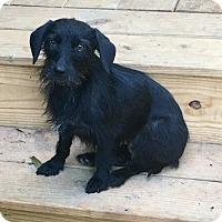 Adopt A Pet :: Winifred -one sweet, cute girl - Stamford, CT