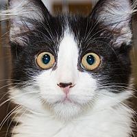 Adopt A Pet :: Sara - Irvine, CA