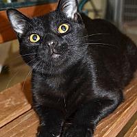 Adopt A Pet :: Midnight - Michigan City, IN