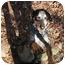 Photo 3 - Hound (Unknown Type)/Spaniel (Unknown Type) Mix Dog for adoption in Ellijay, Georgia - Nick