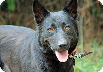 Belgian Shepherd/Shepherd (Unknown Type) Mix Dog for adoption in Marietta, Georgia - Madeline