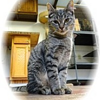 Adopt A Pet :: Charlotte - Shelton, WA