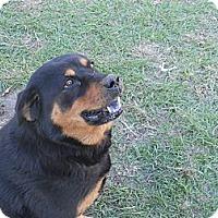 Adopt A Pet :: Sahsa - Camden, SC