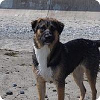 Adopt A Pet :: Bella - New Boston, NH