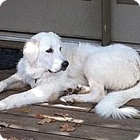 Adopt A Pet :: Nina  *Adopted - Oklahoma City, OK
