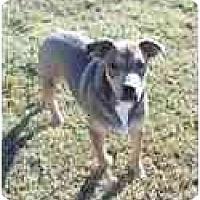 Adopt A Pet :: Buster - Adamsville, TN