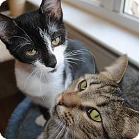 Adopt A Pet :: Itsy - Monroe, NC