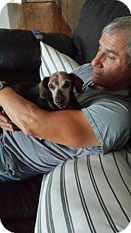 Dachshund Mix Dog for adoption in Hurricane, Utah - Penny