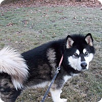 Adopt A Pet :: Zorro - Augusta County, VA