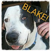 Adopt A Pet :: Blake (Courtesy Post) - Scottsdale, AZ