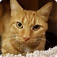 Adopt A Pet :: Buttercup - Irvine, CA