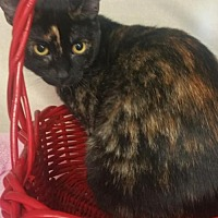 Adopt A Pet :: Pepper - Walnut Creek, CA