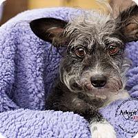 Adopt A Pet :: YOSHI - Inland Empire, CA