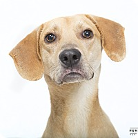 Adopt A Pet :: Memphis - in Maine - kennebunkport, ME