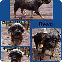 Adopt A Pet :: Beau-pending adoption - Manchester, CT