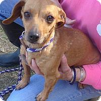 Adopt A Pet :: Ears - Manning, SC