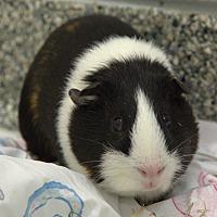 Adopt A Pet :: NEWS - Boston, MA